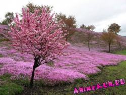 Парк Такиночо Шибазакура