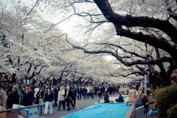 парк уэно,япония
