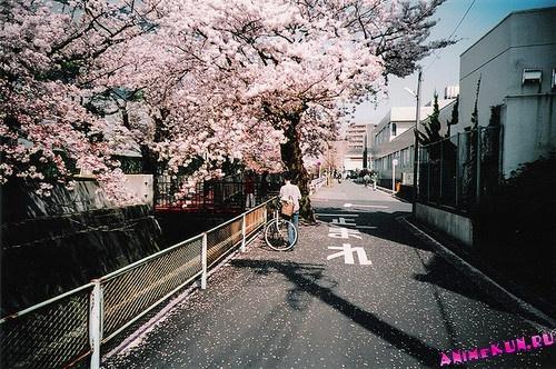 BBC: Япония / BBC: Japan