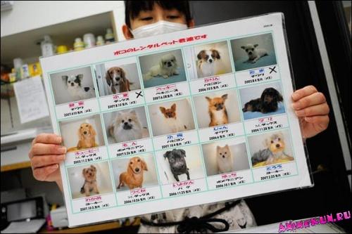 собаки в аренду