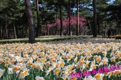 парк весной
