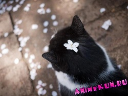 фауна в японии