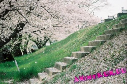 флора японии