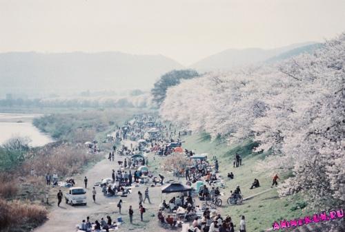 Пикники на цветение сакуры