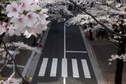 japane photo