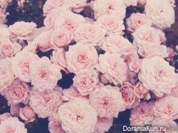 пония фестиваль розы