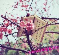 Мнение о японском языке