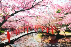 япония,мост