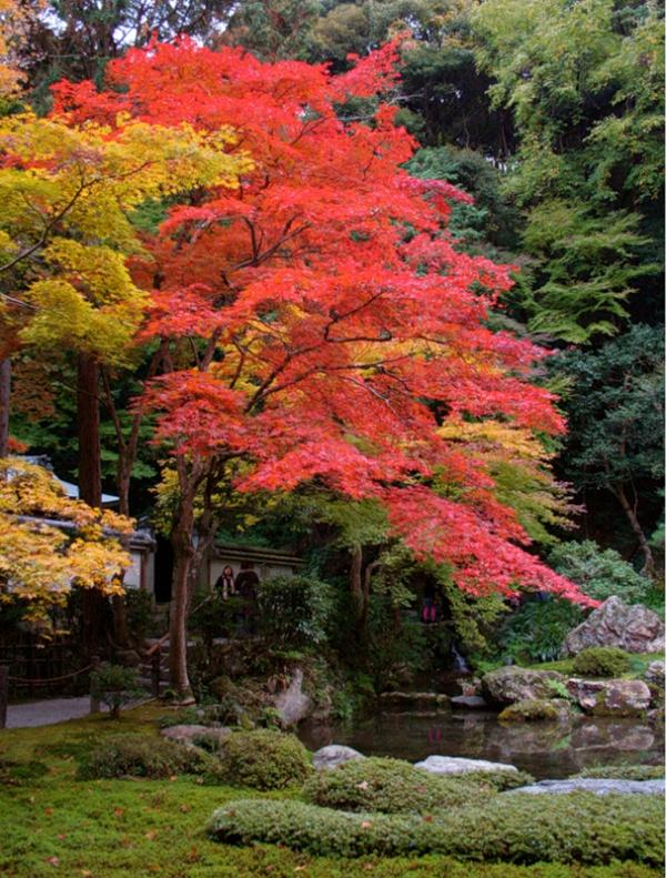 Момидзи - осень в японском стиле