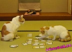 Коты и карута