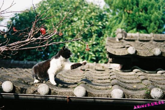 Виды Японии. Галерея. 14 TITLE