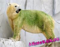 Бело-зеленые медведи