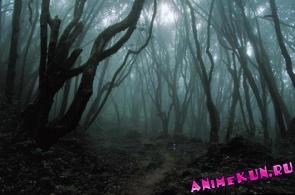 Лес самоубийц в Японии.