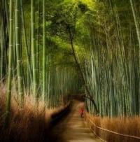 Бамбуковые рощи.