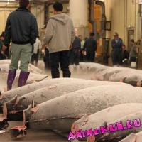 Рыбный рынок Цукидзи.
