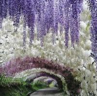 Кавати Фудзи. Сад сказочных цветов.