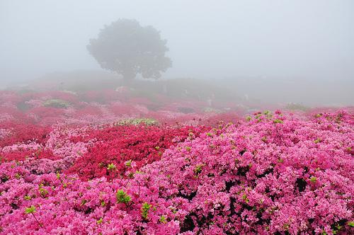 япония фестиваль цветов
