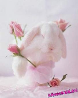 Зайчик с розочкой